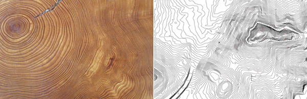 P4F_wood_topography_web